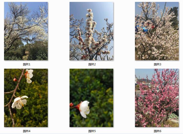 园林案例4.jpg